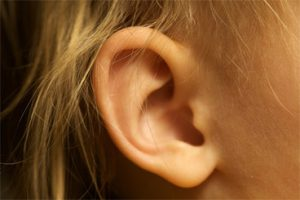 Outer Ear